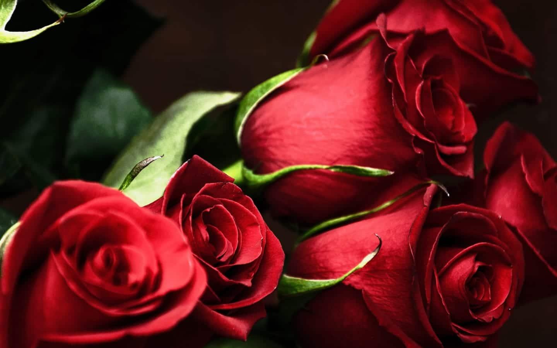 Sfondi belli - Primo piano su mazzo di rose