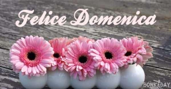 Felice domenica con fiori