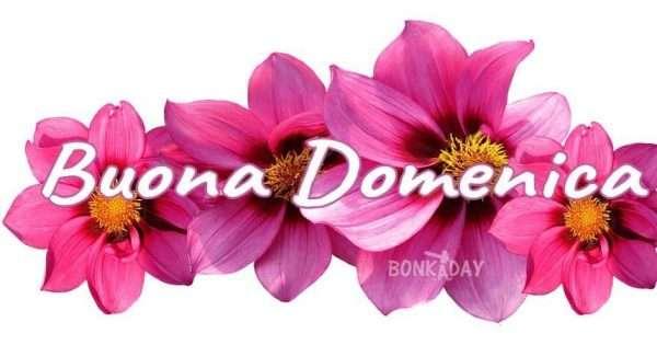Immagini con fiori colorati