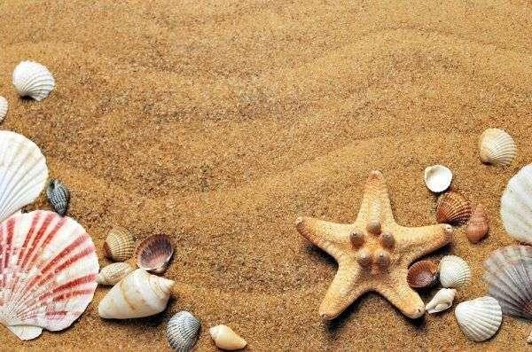 Spiaggia Conchiglie e Stelle marine
