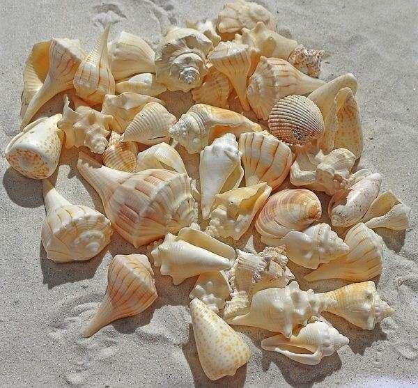 Immagini spiaggia con conchiglie