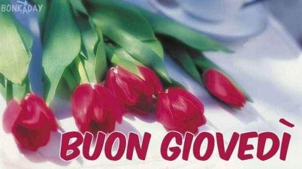 Buon giovedì tulipani fiori