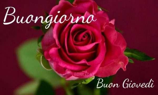 Buongiorno rose rosse
