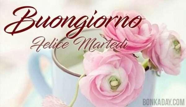 Buongiorno buon martedì rosa