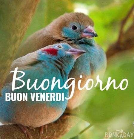 Buongiorno E Buon Venerdì 20 Foto Bonkaday Com