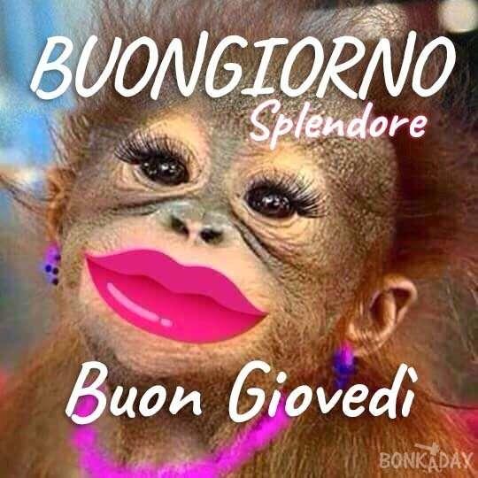 Buongiorno e buon gioved 20 foto for Foto divertenti di buongiorno