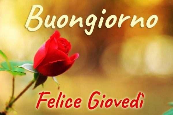 Felice giovedì con fiori rosa rossa