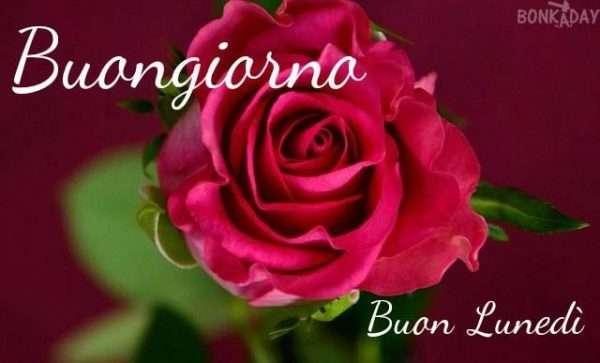 Rosa rossa con scritta buongiorno buon lunedì