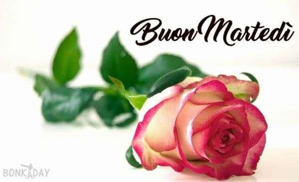 Rosa per te buongiorno