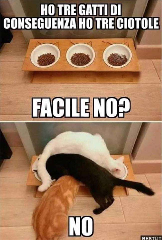 I gatti e come si complicano la vita